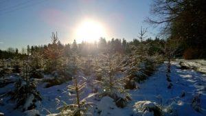 najkrótsze dni w roku - na północy (Sopot) słońce grzeje choć jego wygląda na dość zimne